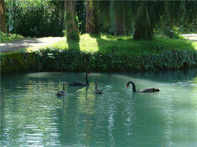 Новый афон озеро